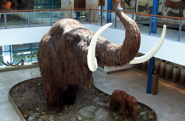 an analysis of the topic of the woolly mammoth Woolly mammoth for many people, the woolly mammoth is the prime example of an ice age mammal these large, furry elephants were perfectly adapted to living on the mammoth steppe of ice age yukon.