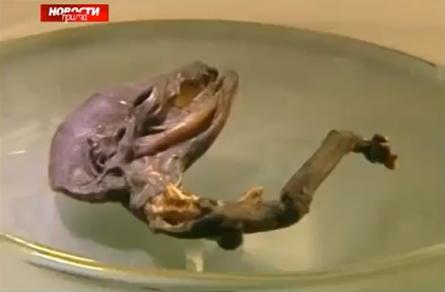 Russian Creature Earthly Mysterious Skull or Alien