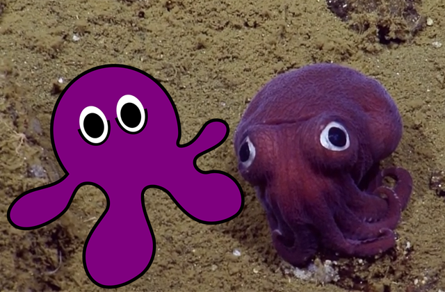 Is the Stubby Squid Cute for an Evolutionary Reason