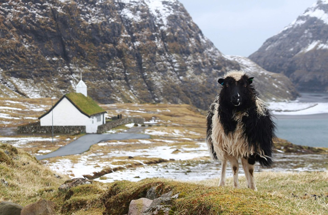 Sheep Cam: From Google Maps to Sheep View on the Faroe Islands – on
